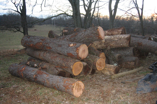 The pile of logs